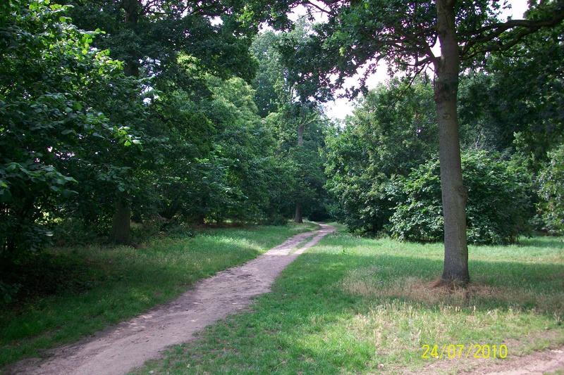 Bourne Park Ipswich Spinney Covert Bourne Park