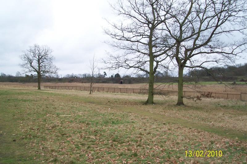 Bourne Park Reedbeds